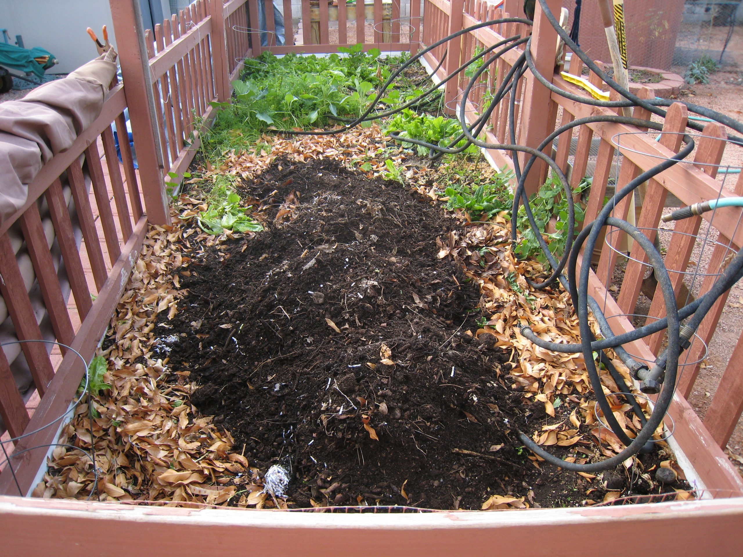 Read more about the article What is Black Mulch?