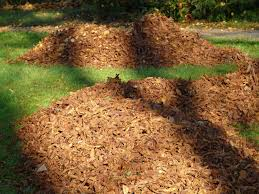 Read more about the article Bark Mulch, how to find best bark mulch near me