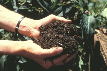Read more about the article Mulch On Sale – Things You Will Not Believe